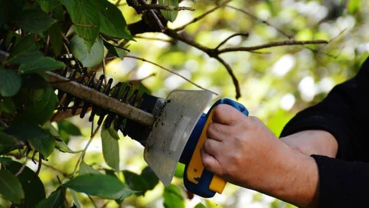 Comment choisir ses outils de jardinage